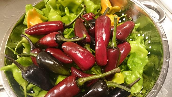 Höstpyssel i trädgård och kök