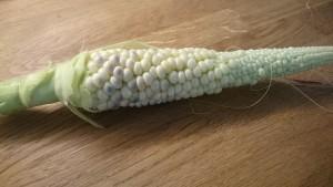 Nästan mogen majs