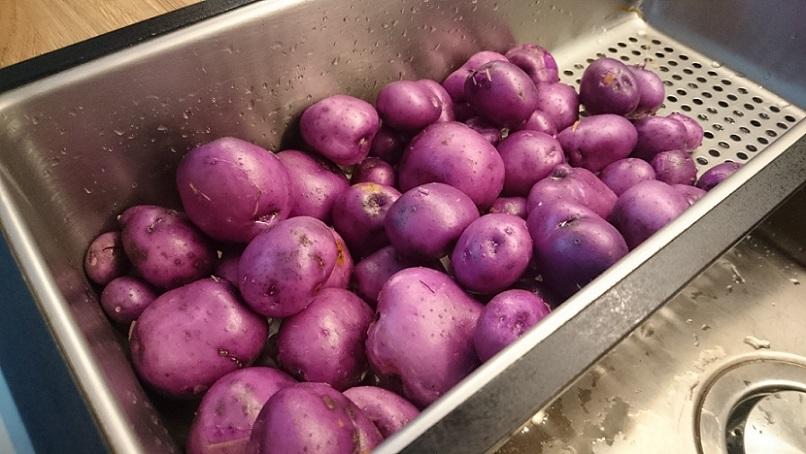 Odling 2017: Hur gick det? – Potatis