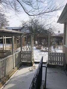 Vinter i köksträdgården